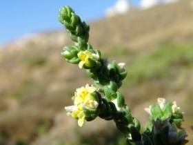 2018-Creta fiori (54)