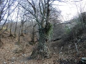 2018-01-13 Rul della Saetta valle Traversante Collio (21)