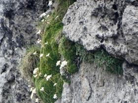 2018-05-20 monti Venturosa e Cancervo (72)