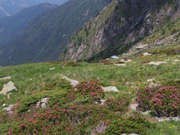 11 cima Terrefredde dalla val Braone, 1-lug-2006 (15)
