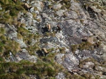 2010-09-19 lago Gelt val Sanguigno 110