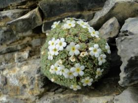 2012-06-09 Monte Asino di Bazena 018