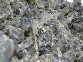 2012-06-09 Monte Asino di Bazena 023