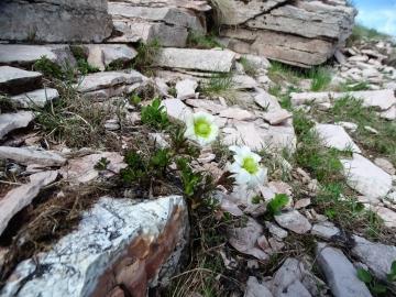 2017-06-02 Bondone tre cime (137)