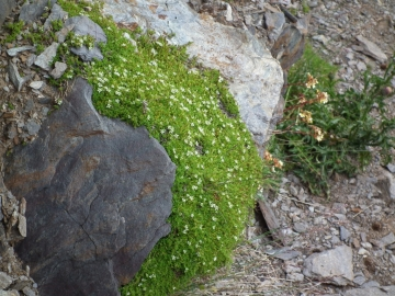 2011-07-20 sentiero Curo'  (6).jpg