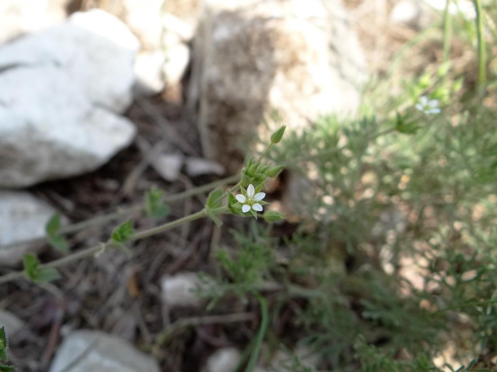 2018-04-28 fiori s.Marco 116
