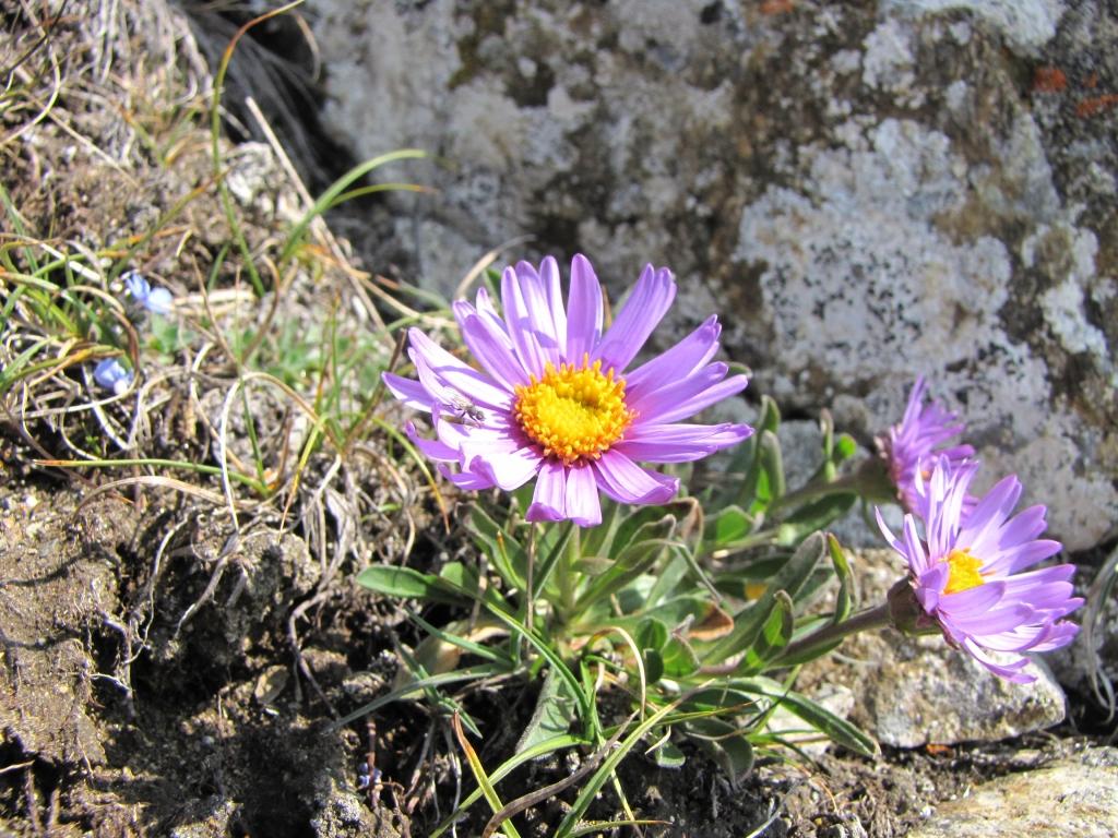 2009-08-01 passo contrabbandieri albiolo 056