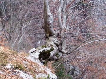 02 2006-12-16 passo del Frate(41).jpg