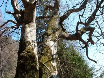 2005-04-03 Staboletto Vermengoi(22).jpg