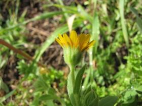 2010-04-18 tremosine_tignale 029