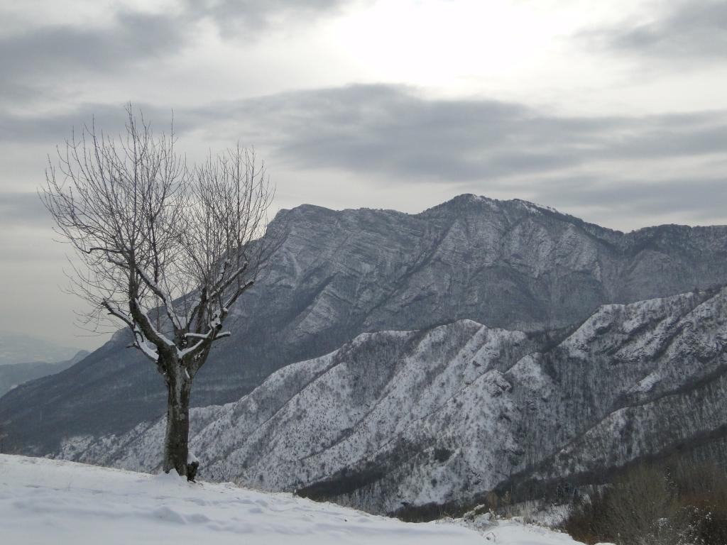 10 2012-02-04 Campei de Sima 008