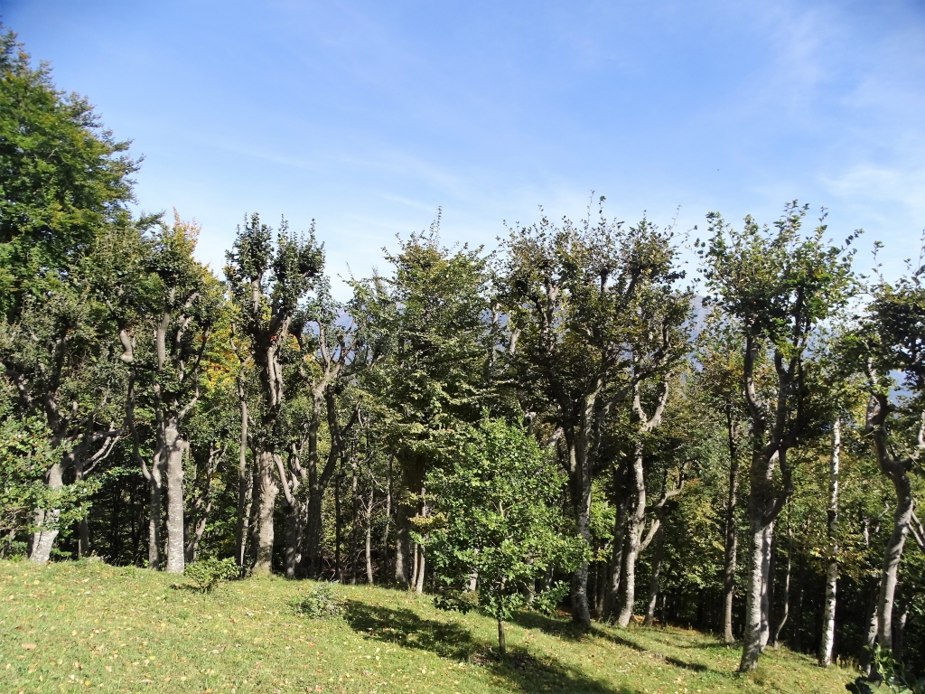 2018-10-03 canalino dei Sassi Cancervo (75)