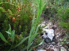 2011-05-29 carpaglione zingla 063