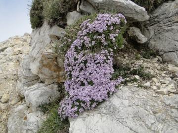 45 2014-06-22 Val D'Illasi e Carega 023