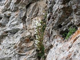 2019-06-16 cima Gavrdina dal Faggio (58)