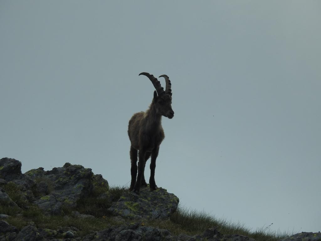 2018-07-01 cima Valpianella Benigni 056