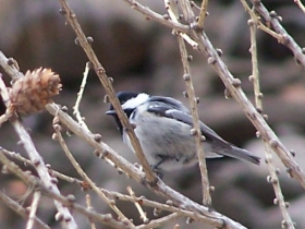 2008-04-05 valle delle messi uccellini (4)