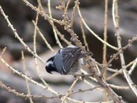 2008-04-05 valle delle messi uccellini (7)