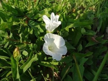 2021-09-06-fiori-Scerne-di-Pineto-35