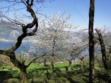 16 2011-04-10 Garda-Campo 045