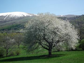 20 2011-04-10 Brenzone Baldo (65)