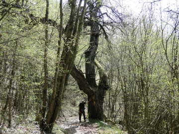 23 2011-04-10 Garda-Campo 061