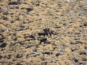 04 2012-11-24 valle scura Valzurio 066
