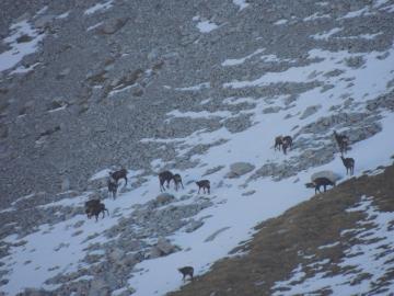 16 2012-11-24 valle scura Valzurio 072