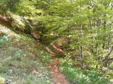 12 2009-05-20 Valle dei Concei 019