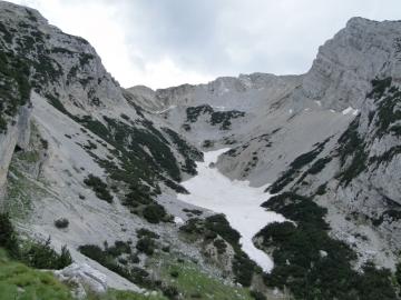 26 2014-07-12 Monte Baldo creste_Alyssum 027