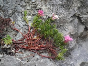 2012-05-01 malga lorina 015