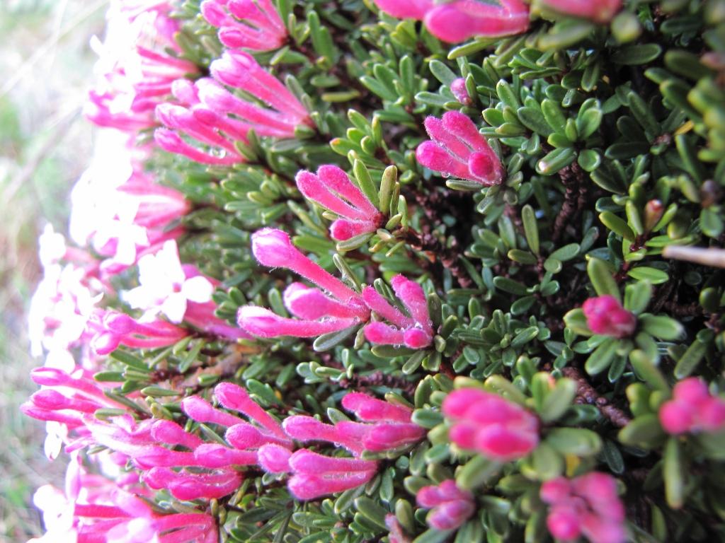 2009-05-10 cima tignalga (55)