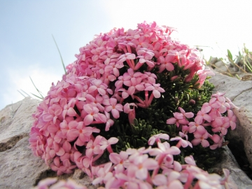 2009-05-10 cima tignalga (65)