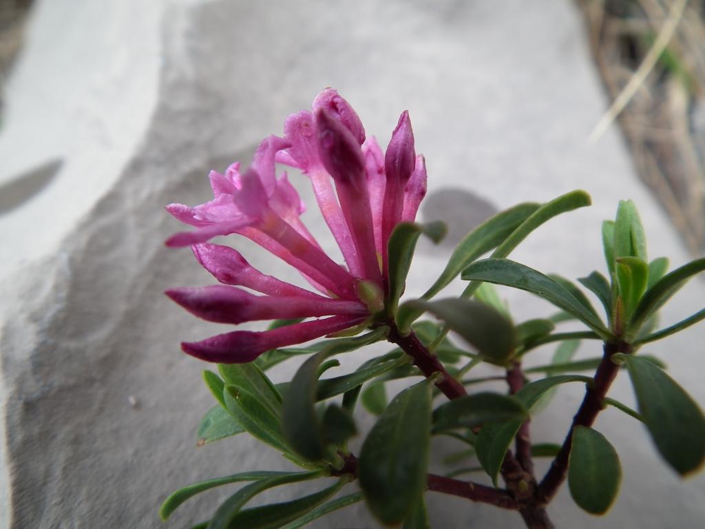 2011-05-14 tremalzo 139