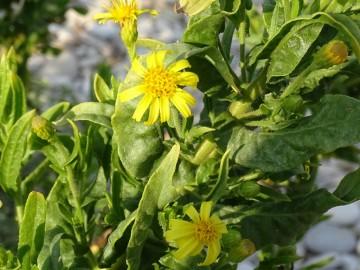 2021-09-06-fiori-Scerne-di-Pineto-62