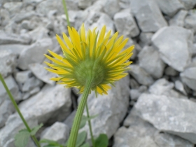 2012-07-01 Sul Cimone 016