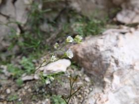 2014-07-19 passo Sella fiori (134)
