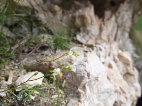2014-07-19 passo Sella fiori (136)