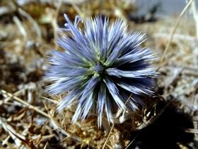 2018-Creta fiori (27)