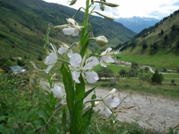 2010-08-04 laghi albiolo trentini 129