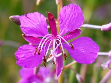 fiori del mortirolo 2 sett 2007 010
