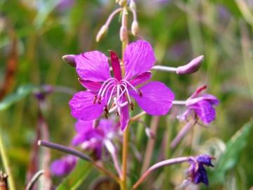 fiori del mortirolo 2 sett_ 2007 002
