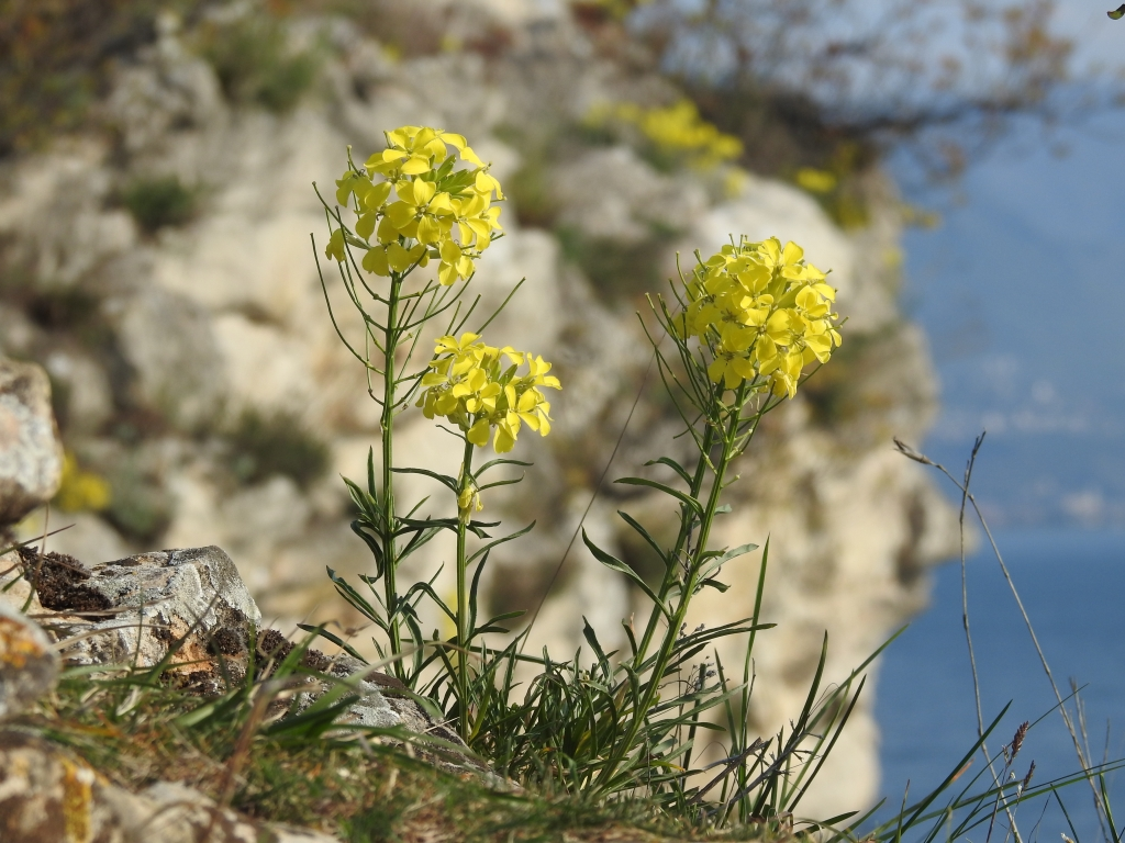 2017-04-02 fiori Manerba 024