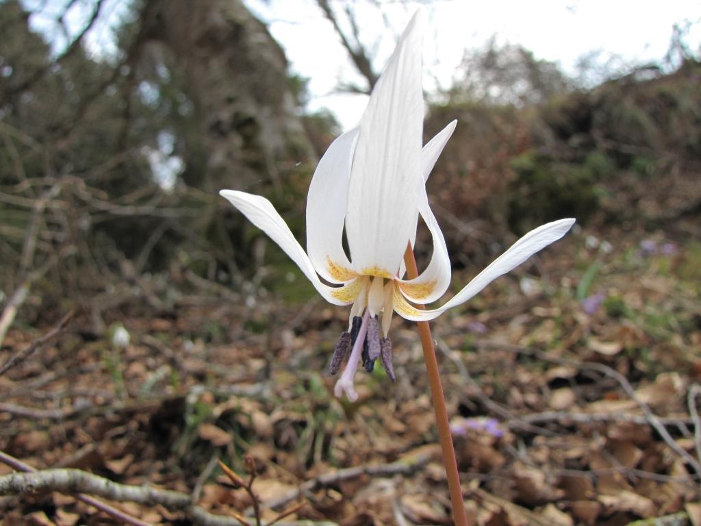 2009-04-13 monte carona (94)