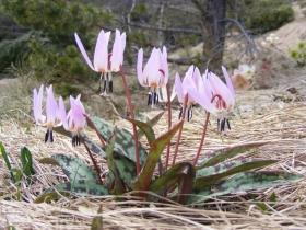 2009-04-13 Monte Carone 053