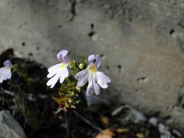 2011-10-16-La-ferrata-di-Cima-Capi-012