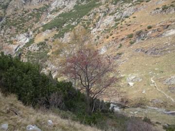 2020-11-01-valle-di-Fiumenero-21