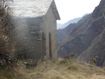 2020-11-01-valle-di-Fiumenero-26