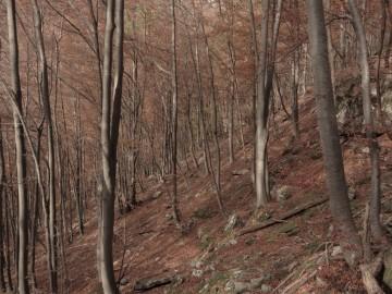 2020-11-01-valle-di-Fiumenero-47
