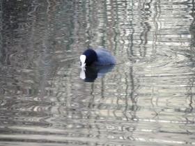 2012-11-02 lago endine 034